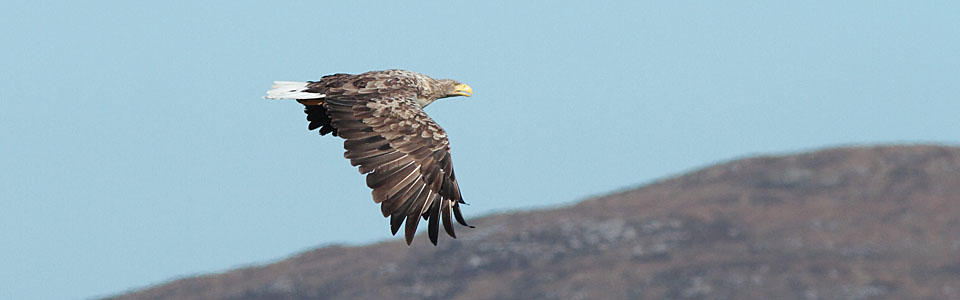 Tour Calendar White-tailed Eagle