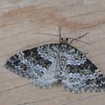 Grey Mountain Carpet